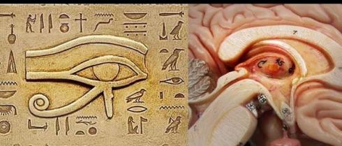 El Ojo de Horus y la glándula pineal.jpg